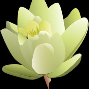 leland mcinnes Water Lily Thumbnail
